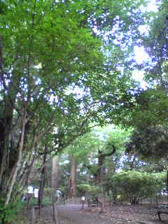 森林浴@都会